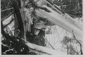 Takto byla poničena ledem a silným větrem velká část lesů v Chráněné krajinné oblasti Žďárské vrchy